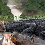 Days Murchison Falls National Park