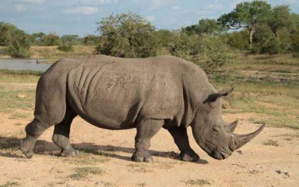 1 Day Ziwa Rhino Trekking Wildlife Uganda