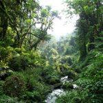 3 days gorillas rwanda Trails