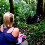Rwanda Gorilla permit increase