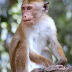 gorilla-trips-Uganda-sezibwa-falls-monkey