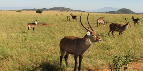 3 days Kidepo wildlife