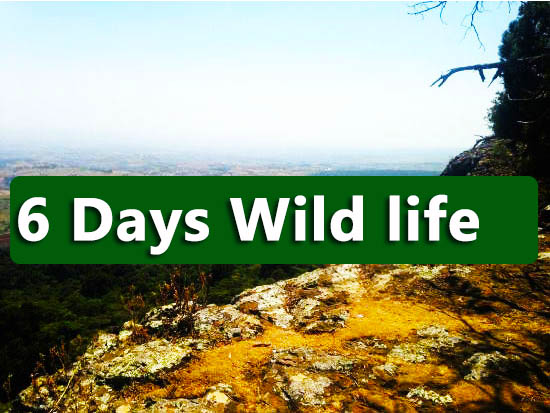 6-days-wild-life-murchison-kidepo