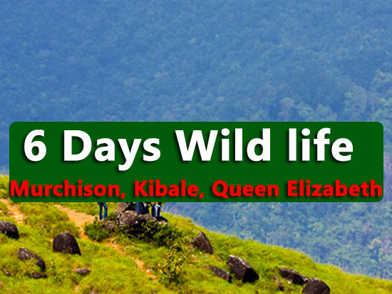6 days wild life queen elizabeth, kibale, murchison national parks