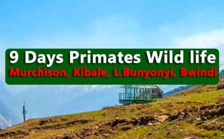 9 days wild life