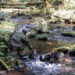 Bwindi Nature walks Gorilla Tracking Tour Trips