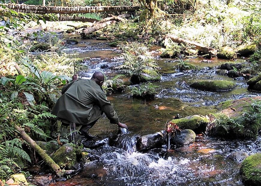 Bwindi Nature walks, Tracking Gorillas, Trekking, Gorilla, day, hiking, mountains, forest, bwindi impenetrable, safari, wild life, monkeys, africa Gorillas