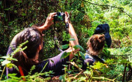 Gorilla tracking Uganda- Gorilla trekking