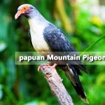 kasenyi birding