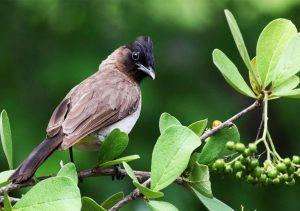 birding bwindi