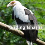 Ishasha Sector