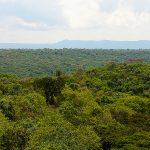 queen-elizabeth-maramagambo-forest