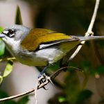 Birding Kibale National Park