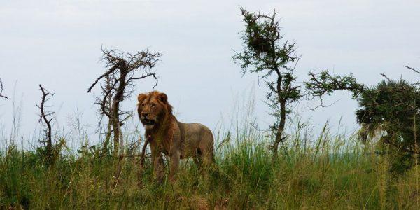 3 Days Queen Elizabeth National Park