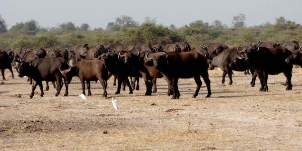 Queen Elizabeth National Park Wildlife